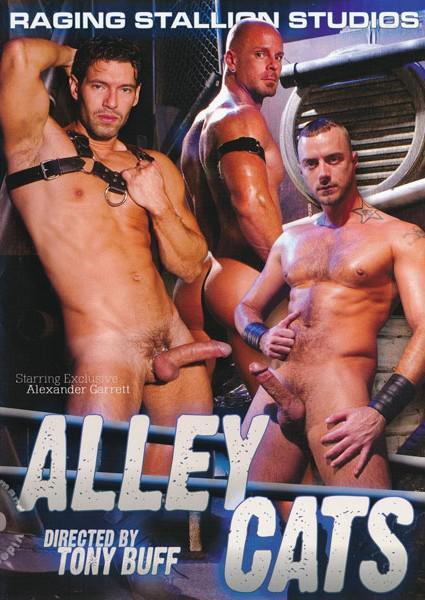 Alley Cats Box Cover