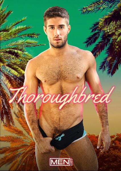 Thoroughbred Box Cover